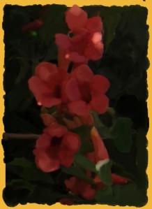 פרחים בהגדלה